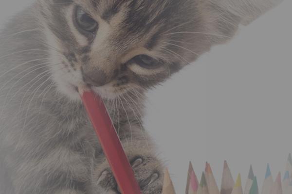 愛犬・愛猫とのライフスタイルをコーディネート